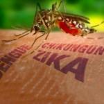 """Un """"Hackaton"""" contra el mosquito que transmite el Zika"""
