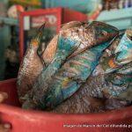 """SOS Ambiente: """"El pez loro y el rigor científico: ambos amenazados en RD"""""""