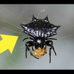 Visite las arañas de RD con Antonio Tosto