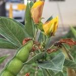 Plantas vistosas y alegres
