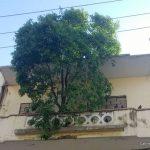 Árboles que crecen en los balcones