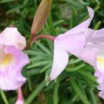 El Botánico desarrollará un proyecto de conservación de las orquídeas nativas