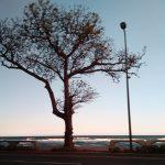 Los almendros del Malecón