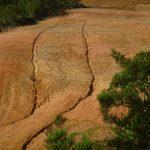 La Academia de Ciencias ya advirtió a Constanza y a Tireo sobre las graves consecuencias de destruir sus bosques