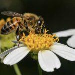 Francisco Paz, biólogo de la UASD, nos regala fotografías de insectos en las redes sociales